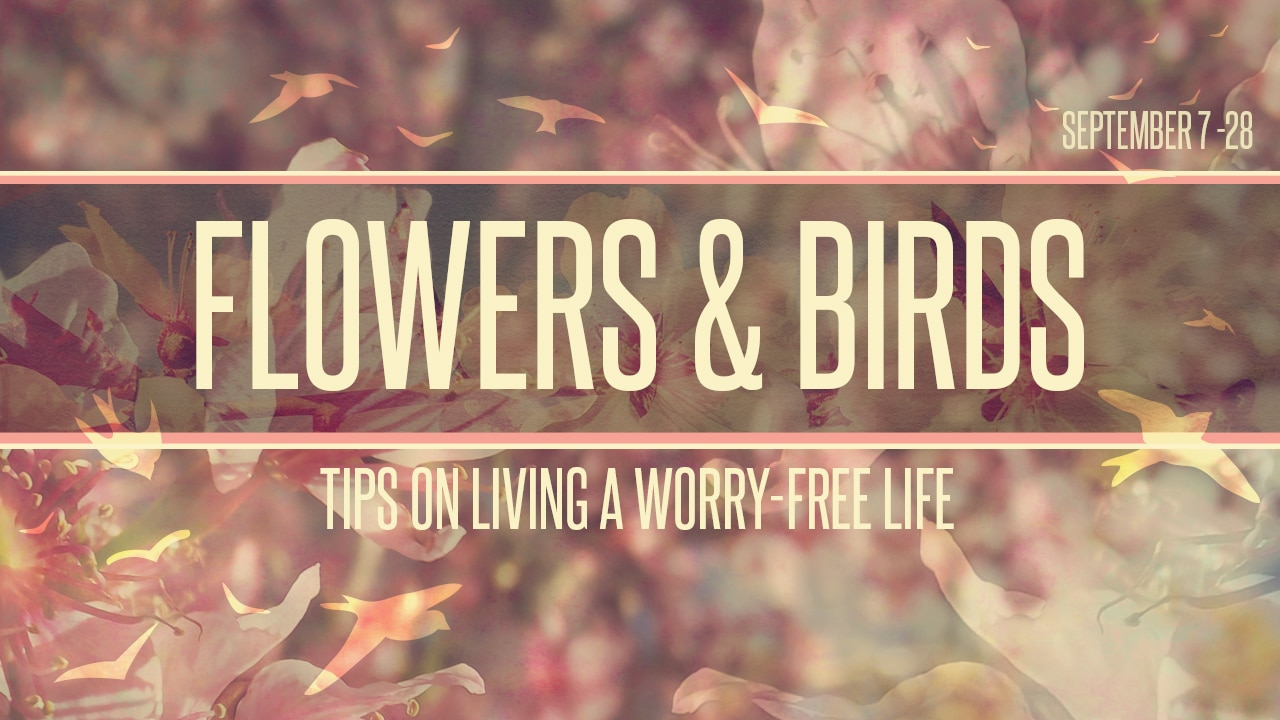 """Featured image for """"Flowers & Birds"""""""